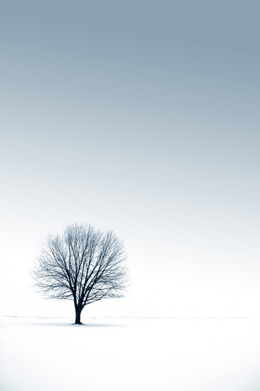 A black tree standing by itself in a white field